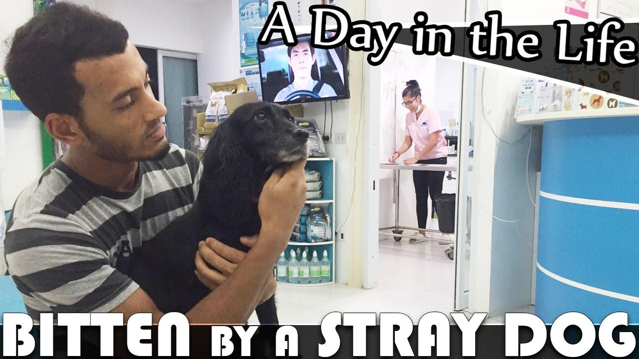 Dog Bitten By Stray Cat