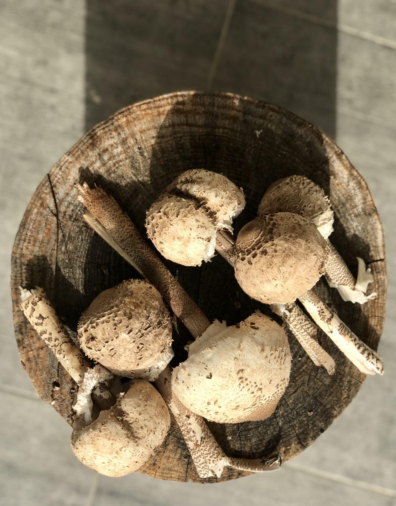 Wild mushrooms on a log
