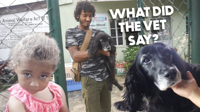 So Surprised By Filipino Vet Experience! ENGLISH Dog Treated PERFECTLY